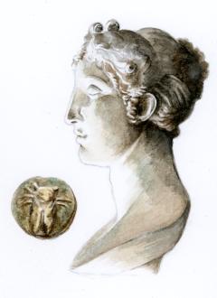 cicada1–1200
