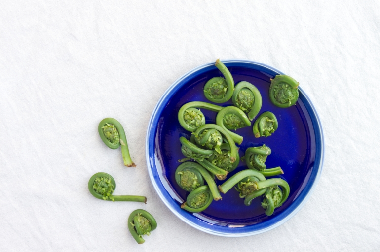 fiddlehead4